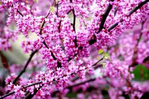 spring flowers http://www.virginiawillis.com